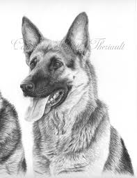 german shepherd rescue dog drawing pet portraits drawing custom