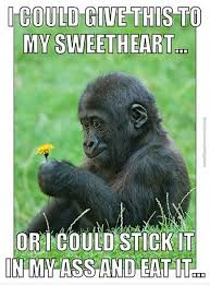 Funny Monkey Meme - monkey problems very funny pics