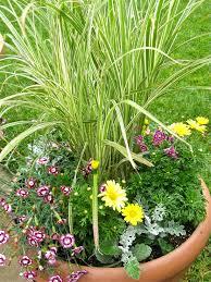 ornamental grass garden satuska co