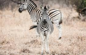 safari our safari honeymoon at chitwa chitwa recommendations and packing