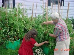 vegetable container garden ideas photograph gardening guid