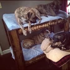 Doggie Bunk Beds Doggie Bunk Beds Bunkbed Doggie Bunk Bed Bunk Beds For
