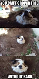 australian shepherd meme 25 hilarious animal memes