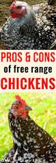 best 25 free range ideas on pinterest free range chicken hens