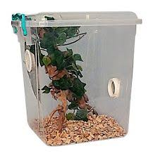 stick insect tank ebay