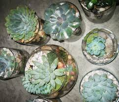Terrarium Coffee Table by Plants Archives Elements Of Style Blog