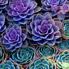 would make a lovely aquarelle succulents 8x8 square original