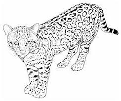 cheetah coloring pages cheetah coloring pages printable u2013 kids