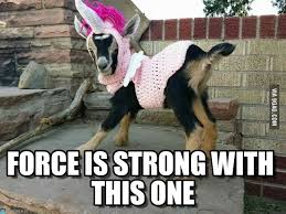 The Force Is Strong With This One Meme - force is strong with this one unigoat meme on memegen