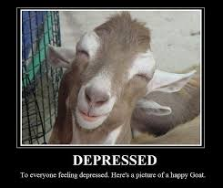 Billy Goat Meme - 23 best goat funnies images on pinterest funny animals funny