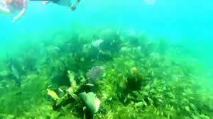 jeep snorkel underwater snorkel sian ka u0027an jeep expedition youtube