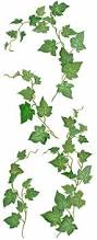 drawn plant ivy vine pencil and in color drawn plant ivy vine