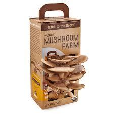 indoor mushroom garden gardening ideas