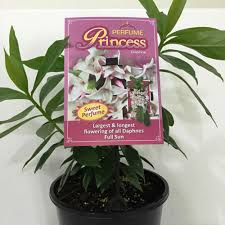 Fragrant Plants List Fragrant Plants Johnstown Garden Centre Ireland
