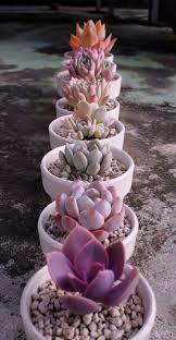best 25 succulent arrangements ideas on pinterest indoor