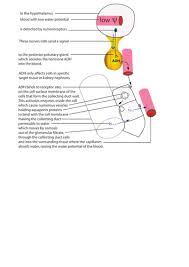 differentiated mutation worksheet by ppickwell teaching