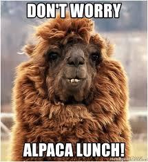 alpaca lunch meme lunch best of the funny meme