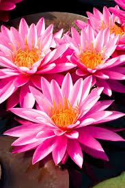 evenimages com high resolution flower photo downloads