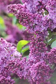 native plants for butterfly gardening benton soil u0026 water 93 best the spring garden images on pinterest spring garden