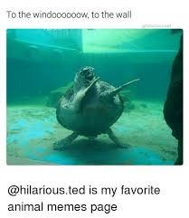 Meme Animals - 25 best memes about animals meme animals memes
