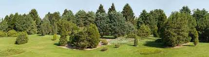 the morton arboretum to plant and protect trees for a greener