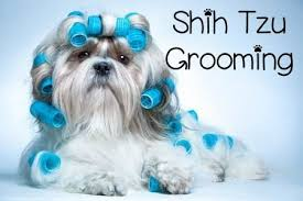 list of shih haircut grooming the shih tzu an overview