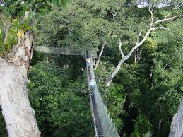 canopy amazon explornapo lodge down the amazon river and 50 miles up the napo river