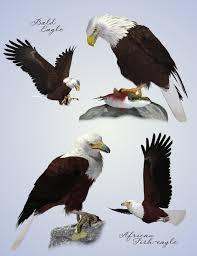 songbird remix birds of prey vol 4 eagles of the world a ken