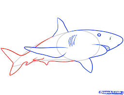 how to draw a shark free download clip art free clip art on