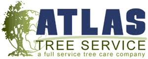 tree service san diego tree care sd pruning tree removal