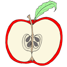 free parts of an apple clipart cliparting com