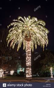 holiday festival of lights charleston palm tree with christmas lights on marion square in historic stock