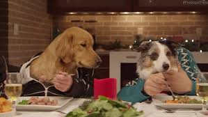 Dogs At Dinner Table Vdeo Shows Humanised Rescue Dogs Around A Table To Enjoy Festive