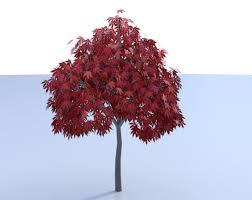 3d japanese maple tree model