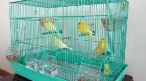 gabbie per canarini gabbia per canarini il contenuto di canarini in casa