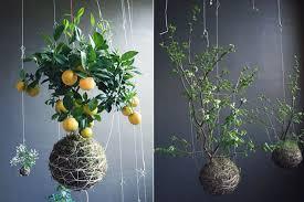Indoor Hanging Garden Ideas Hanging Plants Indoors Design 17 100 Planter Ideas 30