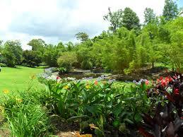 Brisbane Botanic Gardens Mount Coot Tha by About Queensland Mt Coot Tha Botanical Gardens