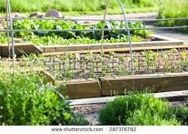 vegetable bed stock images royalty free images u0026 vectors
