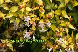 monterey bay nurser plants a