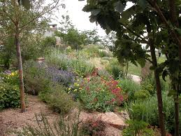 convert your turf xeriscaping xeriscaping pinterest