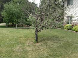 would like to know what could be affecting my trees started in