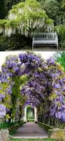 20 favorite flowering vines for the fence and arbor a piece of