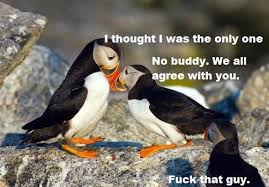 Unpopular Opinion Meme - how i see the unpopular opinion puffin comments section meme guy