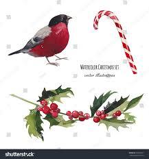watercolor christmas set hand drawn bullfinch stock vector