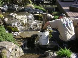 pond maintenance pond algae pond cleaning new jersey nj bjl