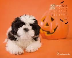 halloween screen savers free free dog screensavers and wallpaper wallpapersafari