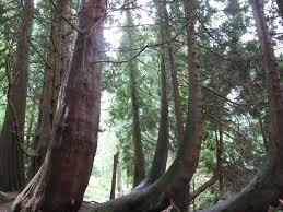 tree the national trust park lacasapark