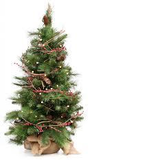 xmas tree on table real table top trees wholesale christmas tree farms