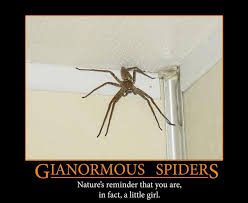 Cute Spiders Phil Ebersole S - 547 best spiders images on pinterest spiders butterflies and nature