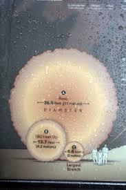2 meters feet dsc02839 bonsai eejit